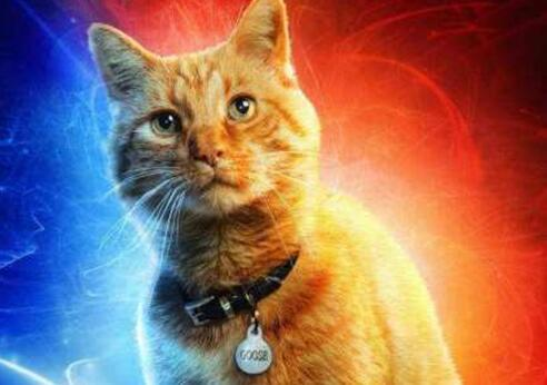 惊奇队长噬元兽什么梗 不是一只普通的橘猫
