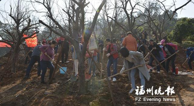 福山郊野公园新增柿子林 台江种下150多株羊蹄甲