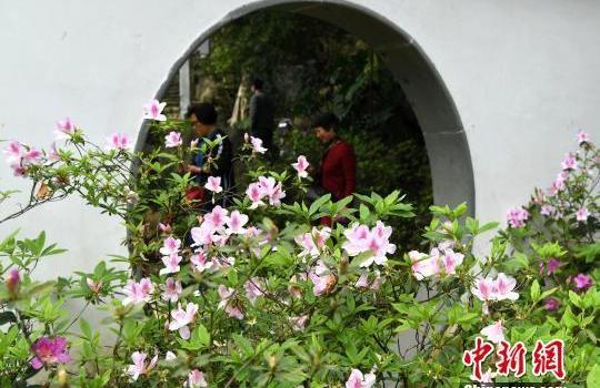 福州:杜鹃花扮靓公园