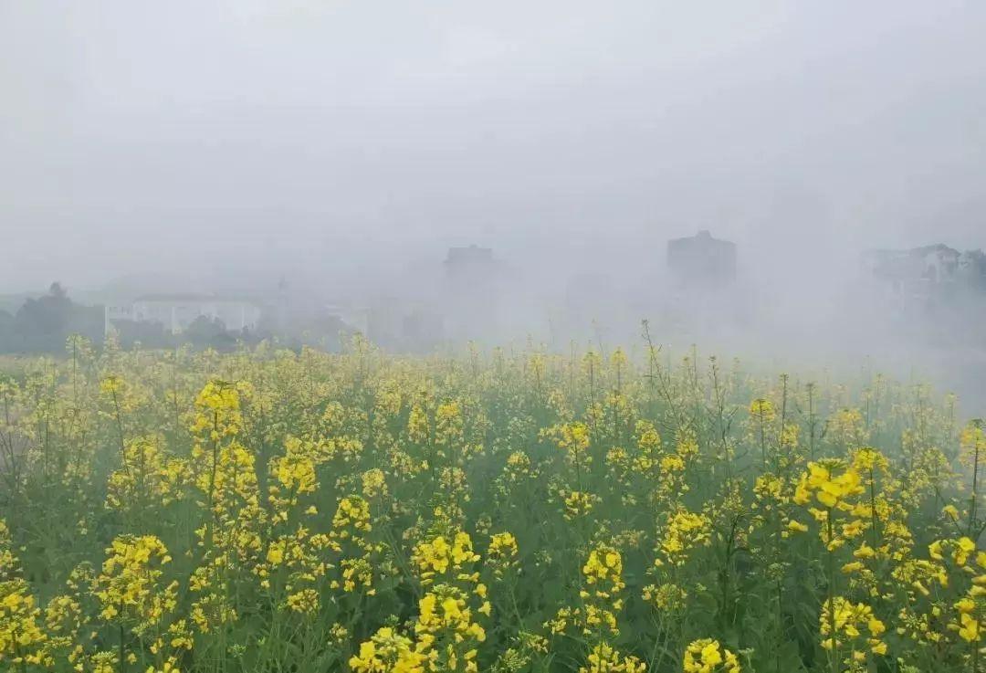 福州,一个淹没在花海里的城市!美哭了~
