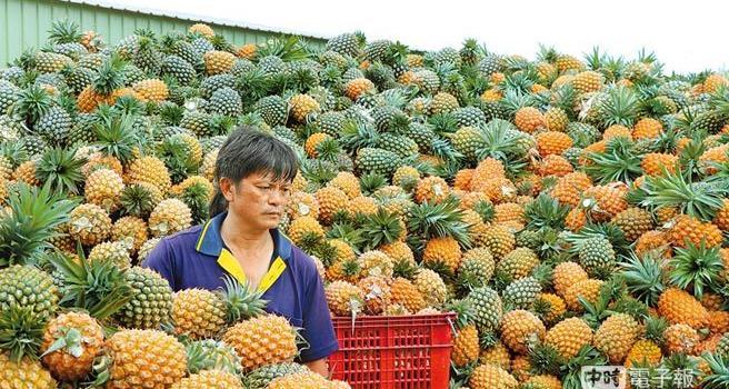 台湾凤梨产季刚开始 产地价格低迷 嘉义农民不满