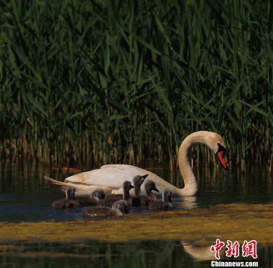 中国八大淡水湖之一的乌梁素海实施生态补水