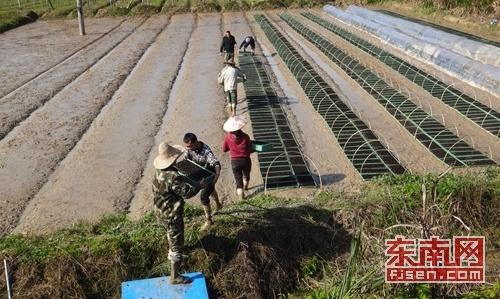南平建瓯小桥镇:再生稻工厂化育秧落田生根