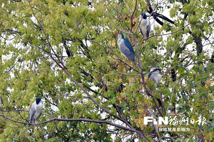 """福州西湖公园环境越来越好 遭遇""""甜蜜的烦恼"""""""