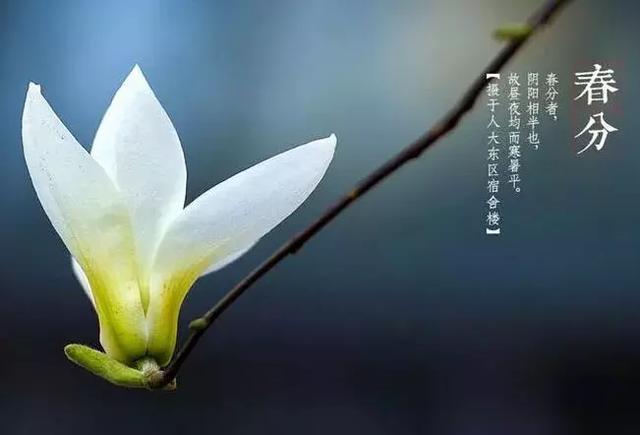 春分问候祝福短语,春分发朋友短句子