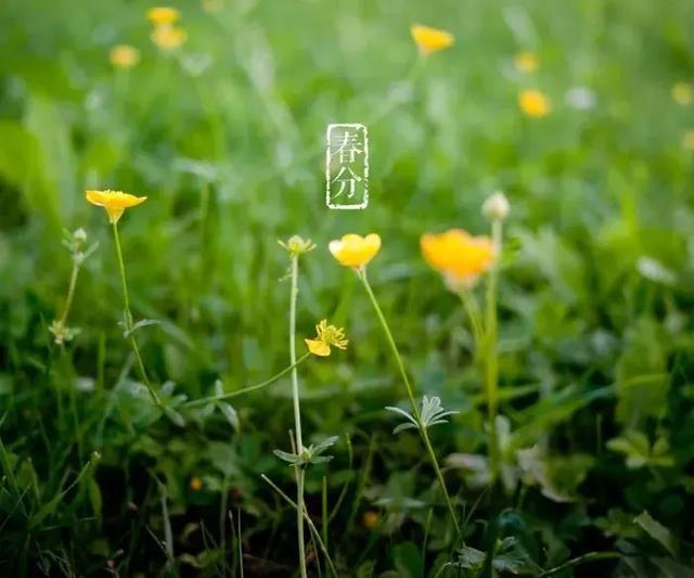 今日春分丨春分至,万物生,正是一年好时光!