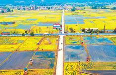 今年擬安排180億元農機購置補貼 財政活水流向綠色農業