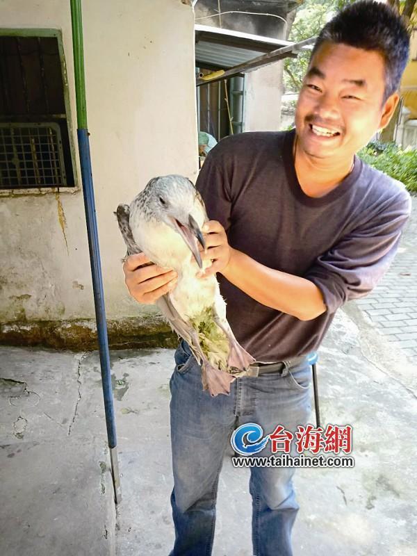 """重庆时时彩注册送38元一市民出海钓鱼 竟""""钓""""到一只黑尾鸥"""