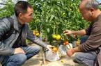 無土栽培:從科技展示到產業化實踐