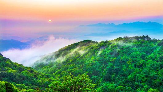 """國際森林日 看中國最""""綠""""省份的最美森林"""