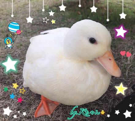 王思聰買的鴨子怎么回事 新寵物竟然是鴨子? 看到價格驚呆