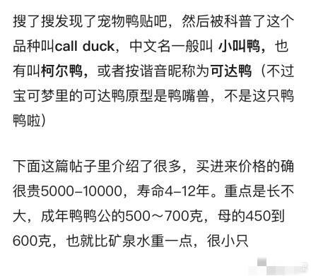王思聪买的鸭子是什么梗 王思聪买的鸭子多少钱是什么品种长啥样
