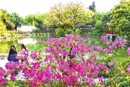福州这些养生会所是不是正规的_福州这些公园 可赏杜鹃倾城之美