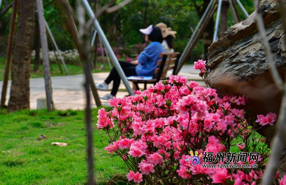 福州杜鹃花似锦 万紫千红踏春来