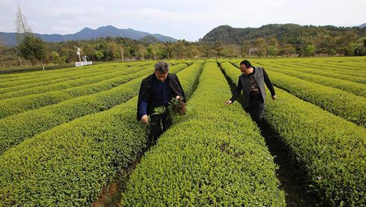 福建南平:科技特派员在行动