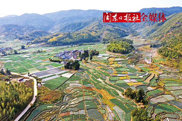 屏南仕洋村万亩高山蔬菜基地年产量达1万多吨