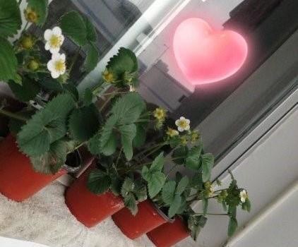 种草莓成高校作业是什么情况 种草莓和学习有什么关系