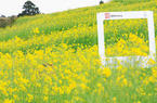 福州:金色梯田随风开 美丽鼓岭换春装