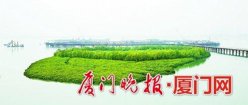 惊艳!厦门红树林主题公园揭开神秘面纱 预计明年底建成开放