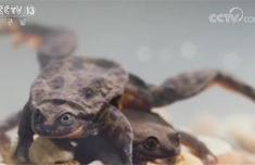 最孤独水蛙遇真爱是什么情况 这是什么梗