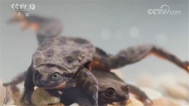 最孤独的鲸鱼_最孤独水蛙遇真爱是什么情况 这是什么梗
