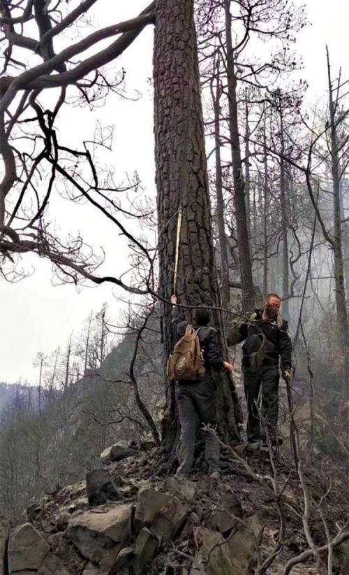 木里火灾确认为雷击火具体是什么情况 凉山火灾起火原因揭秘