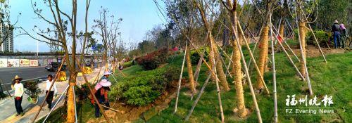福州南二环将新增大树约一万棵 林荫快速通道月底基本建成