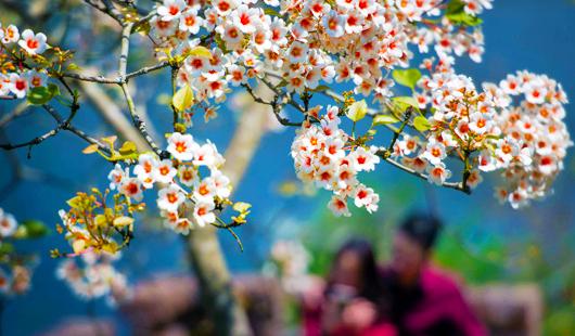 福建永春:与油桐花相约 寻访春日美景