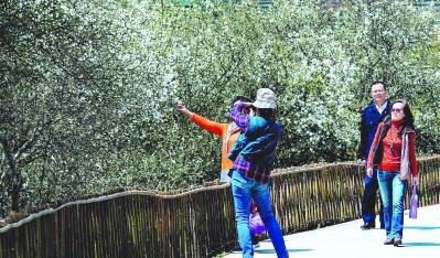 福建漳州:一朵鲜花,催开了产业的绽放
