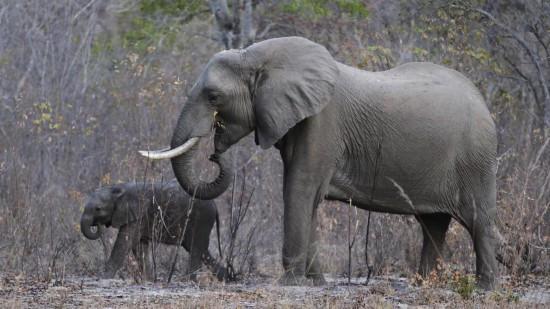 惊呆了!男子炒期货被骗损失惨重|惊呆了!男子杀5000头大象具体什么情况 为什么要杀这么多大象