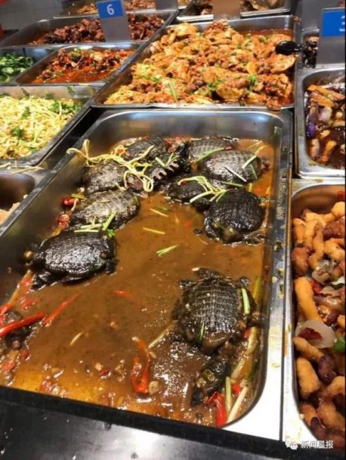 高校食堂推出红烧甲鱼是什么样的?华东师范大学因为这道菜又火了