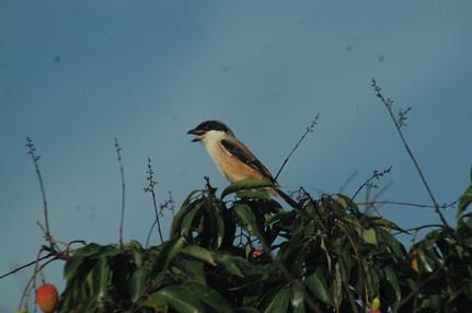 鸽子的反义词是知更鸟是什么梗? 抖音流行语汇总一览
