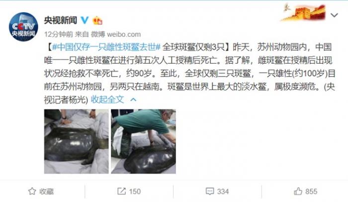 全球仅剩3只斑鳖 中国最后1只雌性斑鳖离世 斑鳖什么样的照片