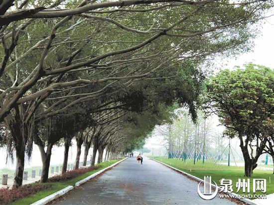 晋江南岸生态公园10月基本完工 集休闲、运动和保护为一体
