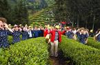 福建武夷山:生态茶园 祭茶喊山