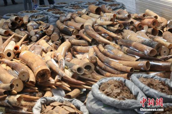 海关总署:今年以来查获走私濒危动植物共500吨