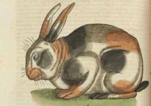来来是什么歌 中世纪邪恶的象征兔子什么梗