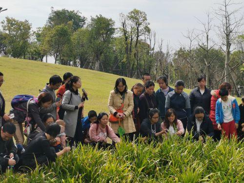 【金鸡讲堂古生物密码】金鸡讲堂第七期:亲子户外课 边认植物边游园