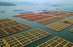 福建连江:小鲍鱼 大产业