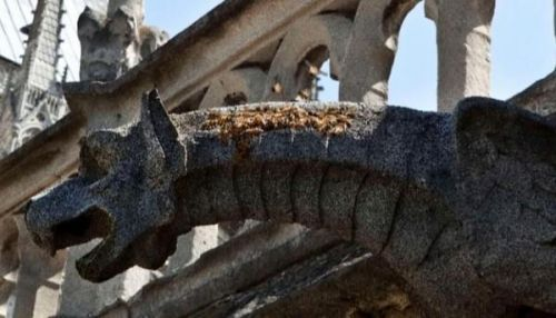 18万只蜜蜂还活着怎么回事?巴黎圣母院为什么养18万只蜜蜂