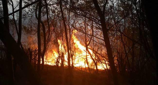 昆明龙池山火灾最新消息扑灭了吗?昆明龙池山火灾现场情况如何