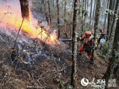 鶴慶肇事者被批捕詳細新聞介紹?鶴慶森林火災是怎么引發的撲滅了嗎
