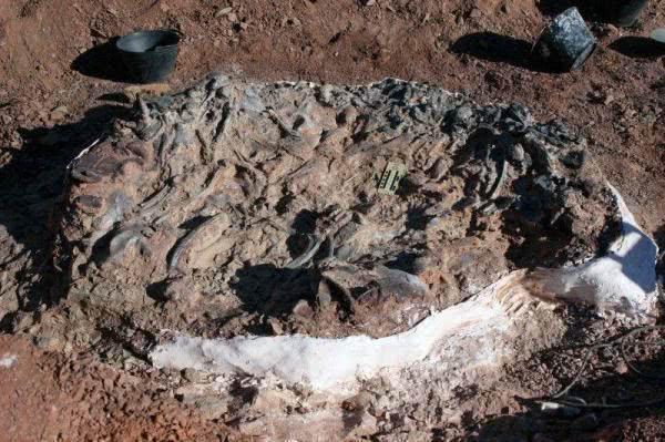 2.2亿年前恐龙墓怎么回事 恐龙墓穴是怎么建造的