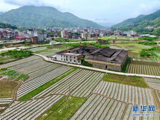 福建永泰:全镇种植花生2500多亩 助农增收