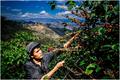 """探索中国农业新路径,拼多多五年打造1000个""""多多农园"""""""