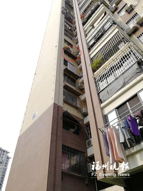 福州一男童从8楼坠落幸无大碍 6楼窗外小花圃救他一命