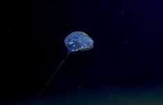 人类首次到达印度洋底部 神秘未知生物现身7000米深海底