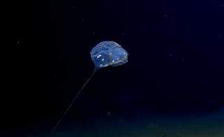 人類首次到達印度洋底部 神秘未知生物現身7000米深海底