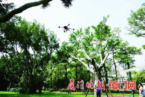 """厦门市政园林部门启动""""呵护榕树""""行动 无人机护绿显身手"""