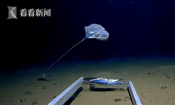 [印度洋发现怪物 视频]印度洋发现怪物怎么回事 印度洋发现怪物照片曝光令人震惊!